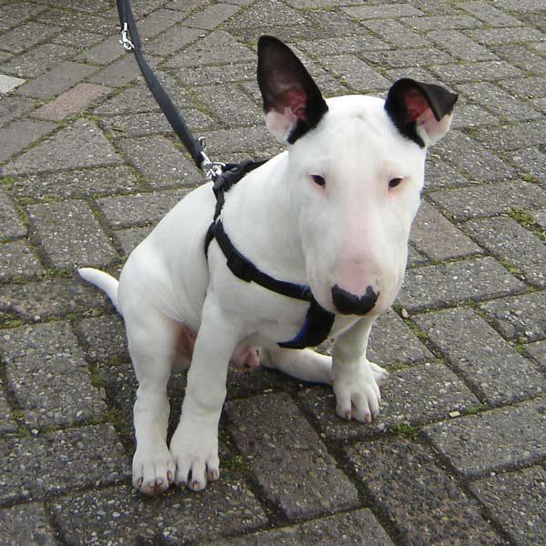 Puppy Braaf! 1