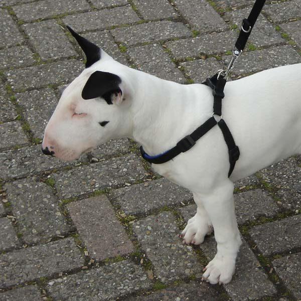 Puppy Braaf! 2