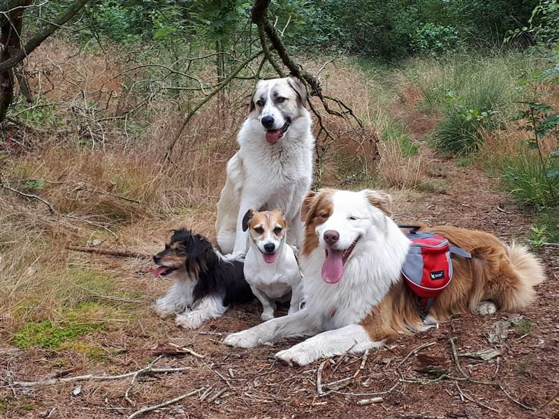 Hondenuitlaatservice Braaf! de honden van de uitlater