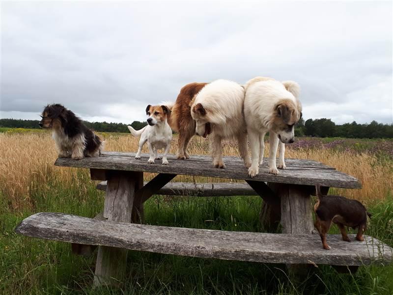 Hondenuitlaatservice Braaf!