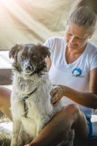 Workshop onstspanningsmassage voor je hond 3