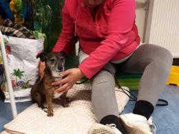 Workshop ontspanningsmassage voor je hond