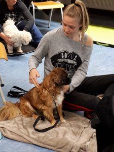 Workshop ontspanningsmassage voor je hond 1