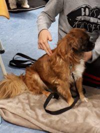 Workshop ontspanningsmassage voor je hond 4